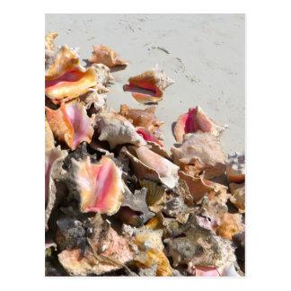Carte Postale Coquillages sur les Turcs de la plage | et la