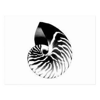 Carte Postale Coquille de Nautilus - noir, gris et blanc