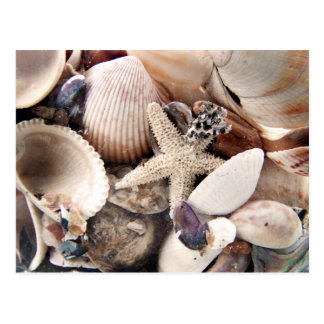 Carte Postale Coquilles de mer