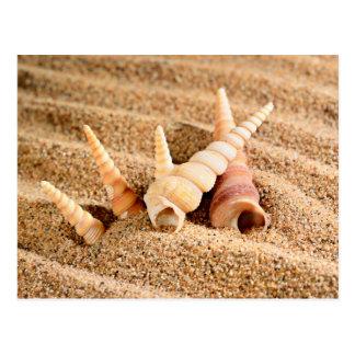 Carte Postale Coquilles de mer sur le sable