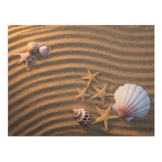 Carte Postale Coquilles et étoiles de mer de mer