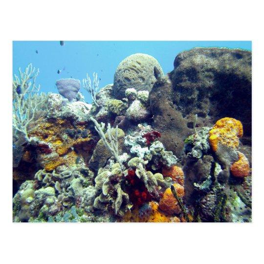 Carte Postale Corals Paradise Reef Cozumel Yucatan, Mexico