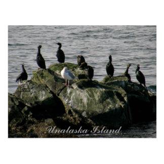 Carte Postale Cormorans et une mouette, île d'Unalaska