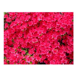 Carte Postale Correction rouge de fleur d'azalée