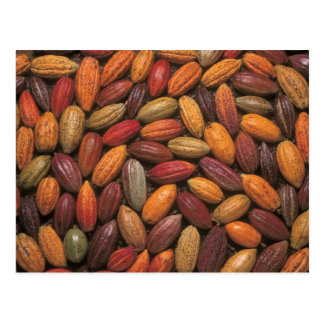 Carte Postale Cosses de cacao