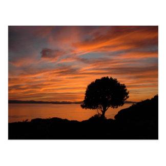 Carte Postale Coucher du soleil de Madrone