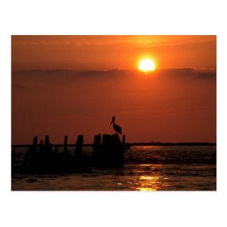 Carte Postale Coucher du soleil de pélican