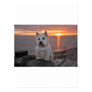Carte Postale Coucher du soleil de Westie