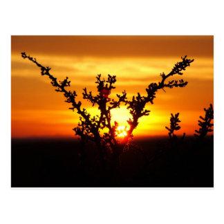 Carte Postale Coucher du soleil occidental de désert du Texas