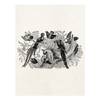 Carte Postale Coucou tropical vintage de cacatoès de perroquets