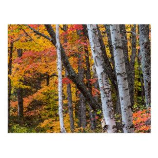 Carte Postale Couleur d'automne dans la forêt près du port de