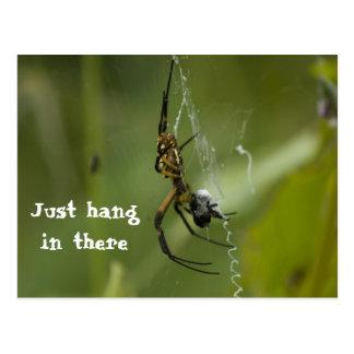 Carte Postale Coup de toile d'araignée de banane juste dedans là
