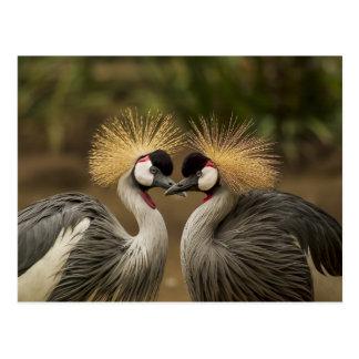 Carte Postale Couples d'oiseau de grue couronnés par gris