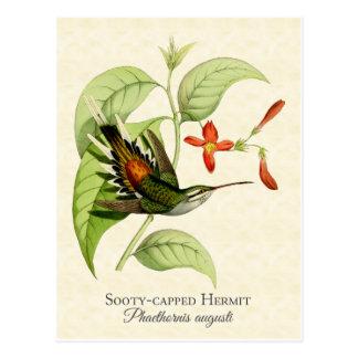 Carte postale couverte de suie d'art de colibri