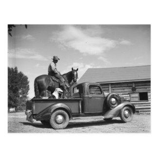Carte Postale Cowboy avec le cheval dans un camion
