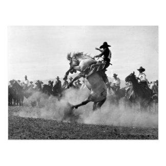 Carte Postale Cowboy sur cheval sauvage s'opposant