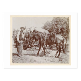 Carte Postale Cowboy vintage 1900