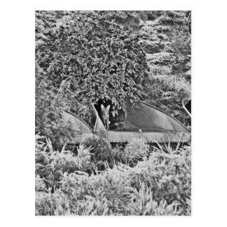 Carte Postale Coyote solitaire
