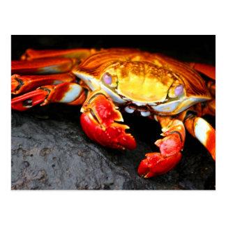 Carte Postale Crabe de Galapagos