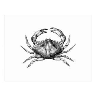 Carte Postale Crabe de roche rouge (Pacifique)