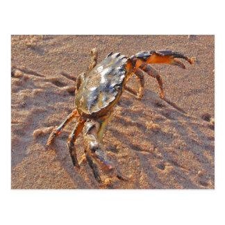 Carte Postale Crabe fâché