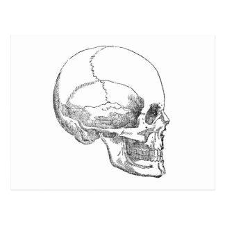 Carte Postale Crâne pauvre de Yorick