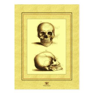 Carte Postale Crânes antiques jumeaux