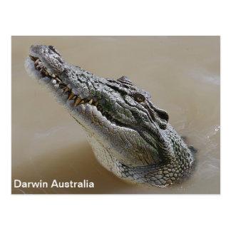 Carte Postale Crocodile Darwin Australie d'eau salée