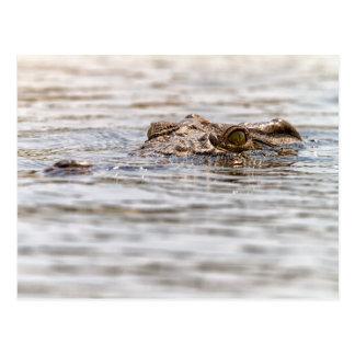 Carte Postale Crocodile du Nil