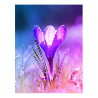 Carte Postale Crocus violet 02.2.F
