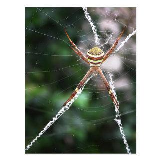 Carte postale croisée d'araignée de Saint Andrews