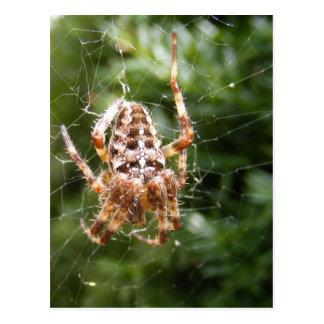 Carte postale croisée de ~ de l'araignée 132