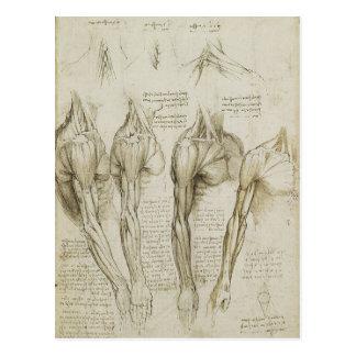 Carte Postale Croquis squelettiques humains de l'anatomie de da