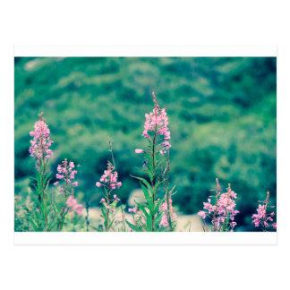 Carte Postale crossprocess de fireweed