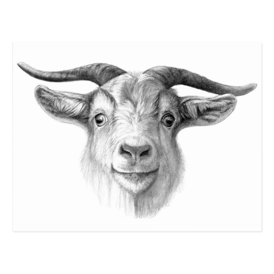 Carte Postale Curious goat  G124