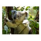 Carte Postale Cutie de koala