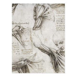 Carte Postale Da Vinci, Leonardo - étude de l'anatomie