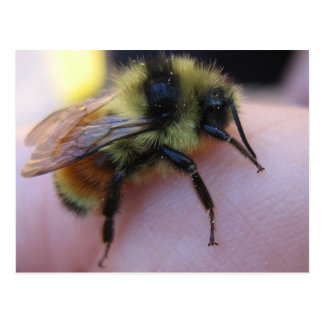 Carte postale d'abeille