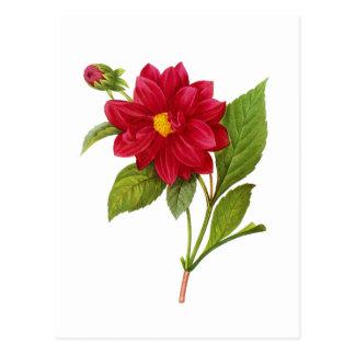 Carte Postale Dahlia rouge par Pierre Joseph Redoute