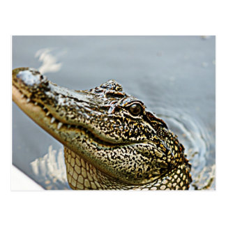 Carte postale d'alligator de la Louisiane