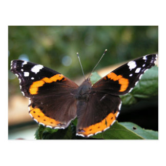 Carte postale d'amiral rouge papillon