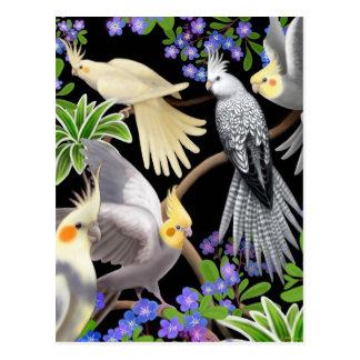 Carte postale d'amour de Cockatiel