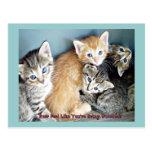 Carte postale d'amusement de Kittie