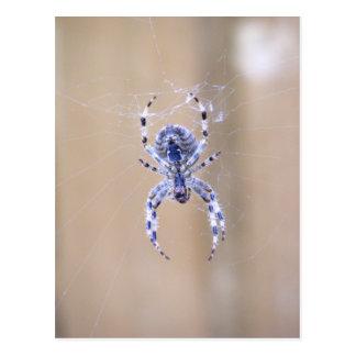 Carte postale d'araignée de jardin