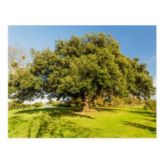 Carte postale d'arbre de jardin de cour de