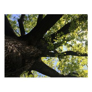 Carte postale d'arbre de lumière du soleil