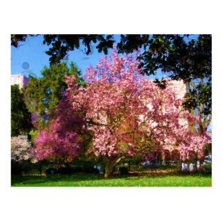 Carte postale d'arbre de magnolia