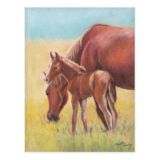 Carte postale d'art de cheval de poulain et de