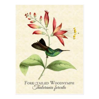 Carte postale d'art de colibri coupée la queue par