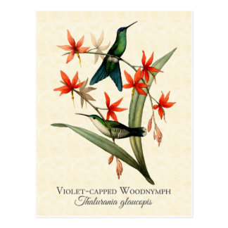 Carte postale d'art de colibri couverte par